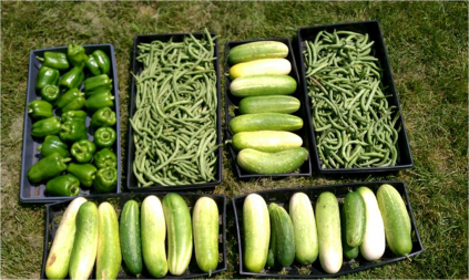 Some of the produce donated from the UST Stewardship Garden in 2012