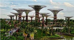 Artificial trees in Singapore attract visitors to the island. (http://www.redicecreations.com/ul_img/20838supertreesC.jpg)